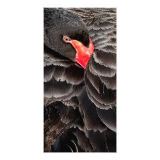 Black swan resting photo greeting card