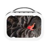 Black swan resting yubo lunch box
