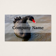 Black Swan Swimming In Water, Animal Photograph Business Card at Zazzle