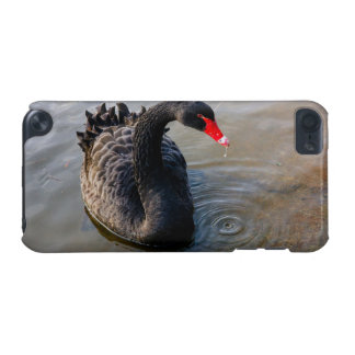 Black Swan Swimming In Water, Animal Photograph iPod Touch 5G Covers