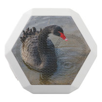 Black Swan Swimming In Water, Animal Photograph White Bluetooth Speaker