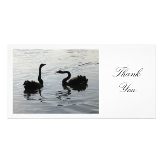 Black Swans Greeting - Thank You Card