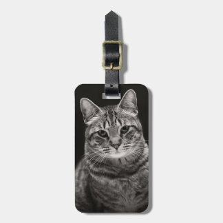 Black Tabby Kitten Bag Tag