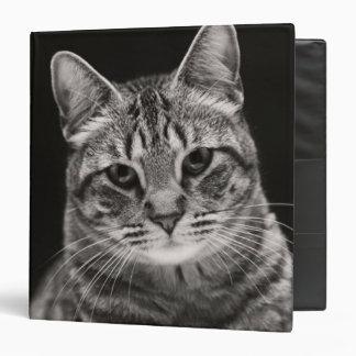 Black Tabby Kitten Binder