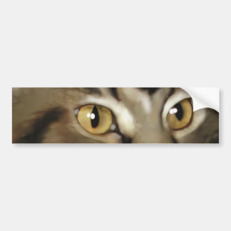 Black Tabby Maine Coon Cat Bumper Sticker