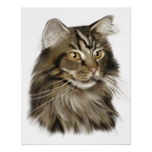 Black Tabby Maine Coon Cat Poster