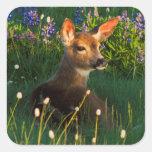 Black-tail Deer Fawn, alpine wildflowers Square Sticker