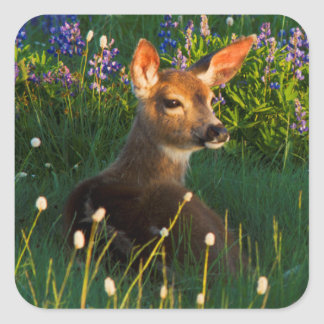 Black-tail Deer Fawn, alpine wildflowers Square Sticker