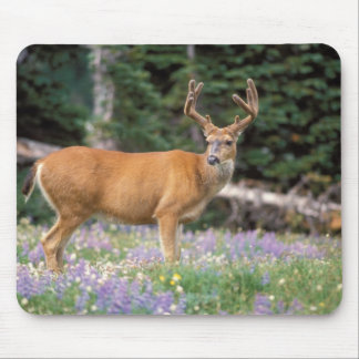 Black-tailed deer, buck eating wildflowers, mouse pad