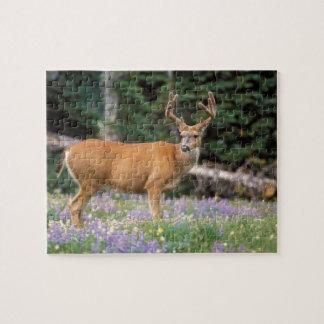 Black-tailed deer, buck eating wildflowers, jigsaw puzzle