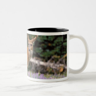 Black-tailed deer, buck eating wildflowers, Two-Tone coffee mug