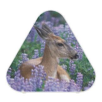 Black-tailed deer, doe resting in siky lupine, bluetooth speaker