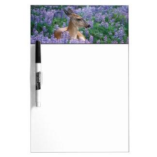 Black-tailed deer, doe resting in siky lupine, dry erase board