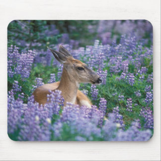 Black-tailed deer, doe resting in siky lupine, mouse pad