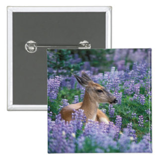Black-tailed deer, doe resting in siky lupine, pinback button