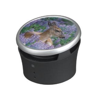 Black-tailed deer, doe resting in siky lupine, speaker