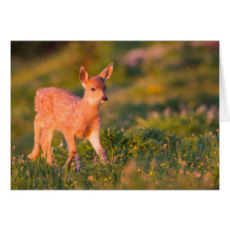 Black-tailed Deer fawn Card