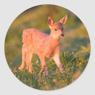 Black-tailed Deer fawn Classic Round Sticker