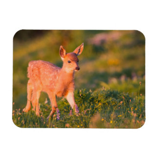 Black-tailed Deer fawn Magnet
