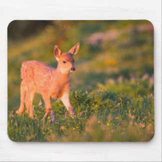 Black-tailed Deer fawn Mouse Pad