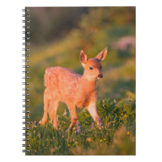 Black-tailed Deer fawn Notebook