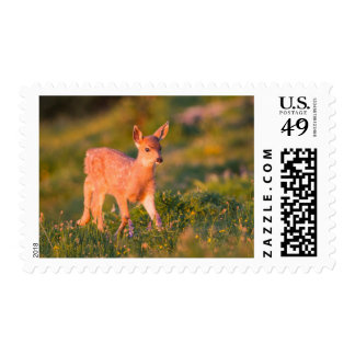 Black-tailed Deer fawn Postage Stamp
