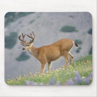 black-tailed deer, Odocoileus hemionus, buck Mouse Pad