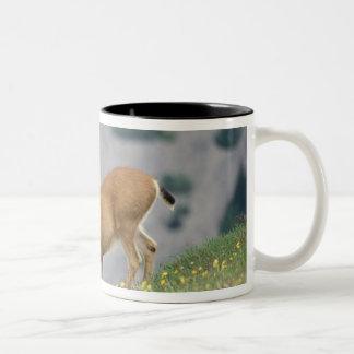 black-tailed deer, Odocoileus hemionus, buck Two-Tone Coffee Mug