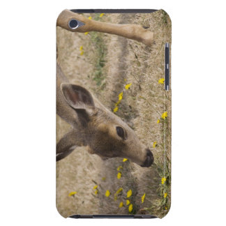 Black-tailed Deer (Odocoileus hemionus) grazing iPod Touch Case
