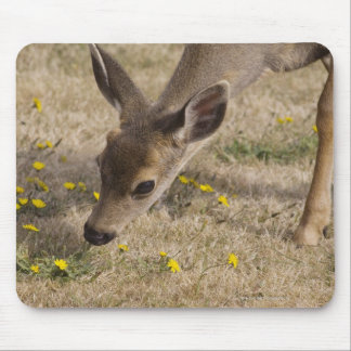 Black-tailed Deer (Odocoileus hemionus) grazing Mouse Pad