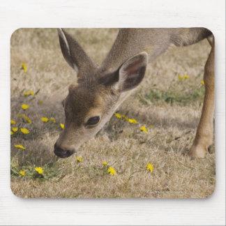 Black-tailed Deer (Odocoileus hemionus) grazing Mouse Pad