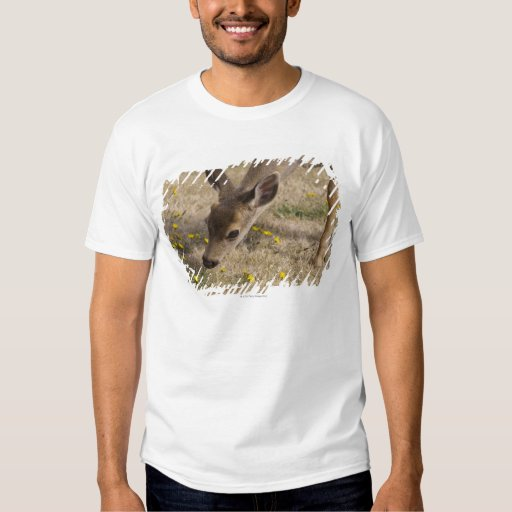 Black-tailed Deer (Odocoileus hemionus) grazing T Shirts