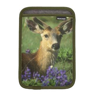 Black-tailed Deer, Odocoileus hemionus), in iPad Mini Sleeve