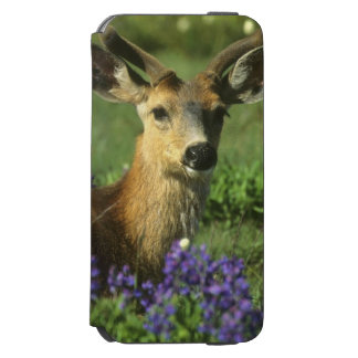 Black-tailed Deer, Odocoileus hemionus), in iPhone 6/6s Wallet Case