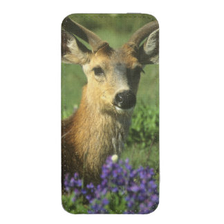 Black-tailed Deer, Odocoileus hemionus), in iPhone SE/5/5s/5c Pouch