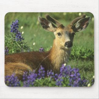 Black-tailed Deer, Odocoileus hemionus), in Mouse Pad