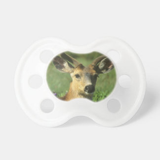 Black-tailed Deer, Odocoileus hemionus), in Pacifier