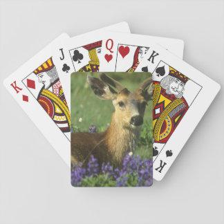 Black-tailed Deer, Odocoileus hemionus), in Poker Cards