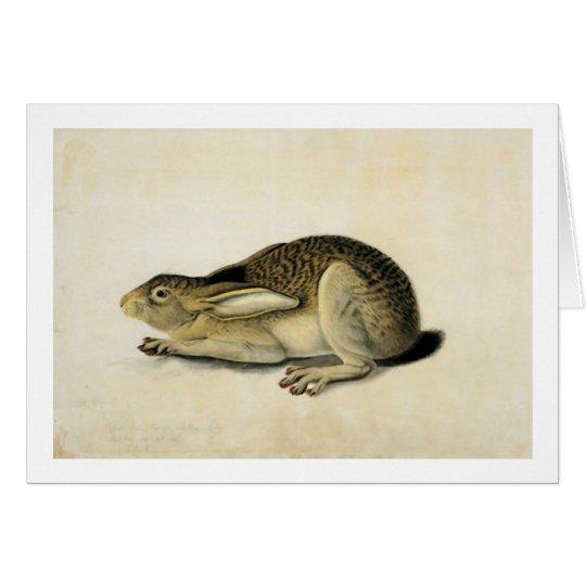 Black-Tailed Hare, John James Audubon Card