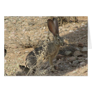 Black-tailed Jackrabbit Stationery Note Card