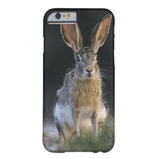 Black-tailed Jackrabbit, Lepus californicus, 2 Barely There iPhone 6 Case
