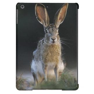 Black-tailed Jackrabbit, Lepus californicus, 2 iPad Air Case
