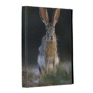 Black-tailed Jackrabbit, Lepus californicus, 2 iPad Cases