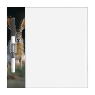Black-tailed Jackrabbit, Lepus californicus, 2 Dry Erase Board