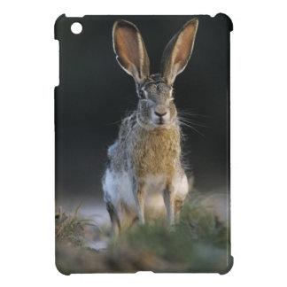 Black-tailed Jackrabbit, Lepus californicus, 2 iPad Mini Cover