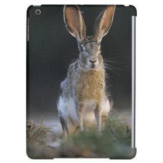 Black-tailed Jackrabbit, Lepus californicus, 2 iPad Air Covers
