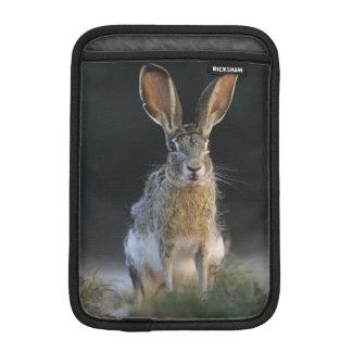 Black-tailed Jackrabbit, Lepus californicus, 2 Sleeve For iPad Mini