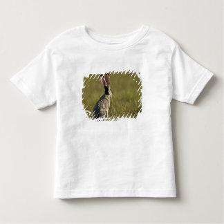 Black-tailed Jackrabbit, Lepus californicus, 2 Toddler T-shirt
