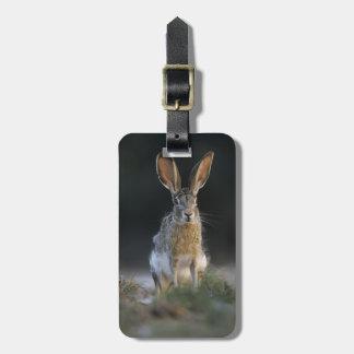 Black-tailed Jackrabbit, Lepus californicus, 2 Travel Bag Tags