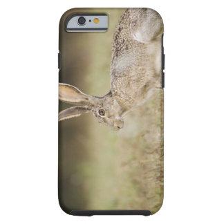 Black-tailed Jackrabbit, Lepus californicus, Tough iPhone 6 Case